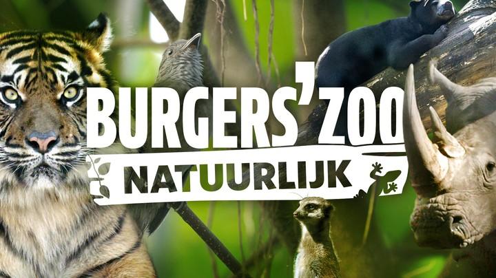 Burgers' Zoo Natuurlijk