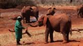 Wild Animal Reunions